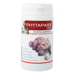 PHYTAPAISE CHAT