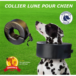 COLLIERS LUNE chien